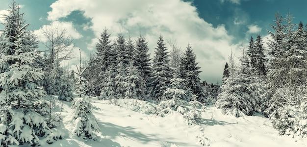 Bela paisagem de inverno com árvores nevadas na floresta, neve branca e céu azul