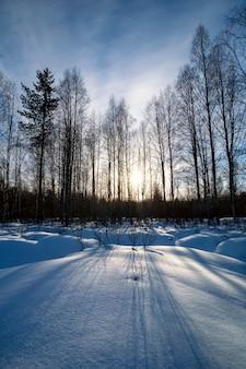 Bela paisagem de inverno com neve, pinheiros, bétulas e sol.