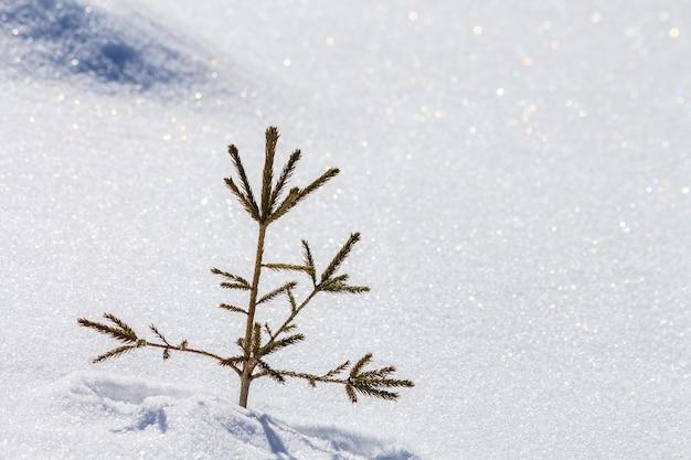 Bela paisagem de inverno de natal.