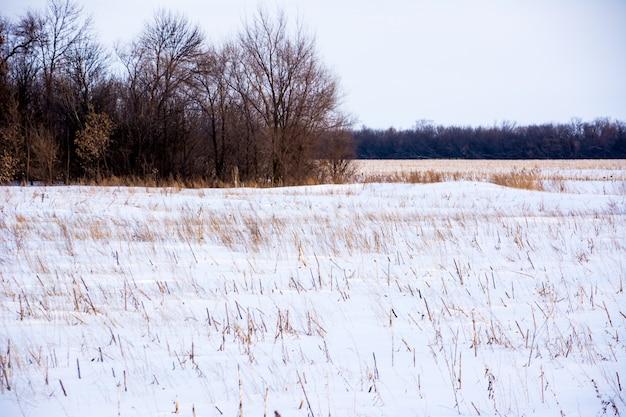 Bela paisagem de inverno e a floresta