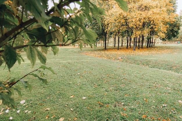Bela paisagem de outono com árvores amarelas, folhas secas de laranja e raios de sol