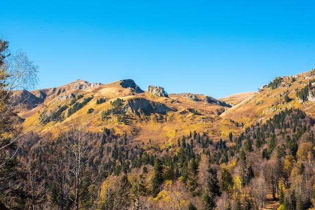 Bela paisagem de outono com árvores amarelas