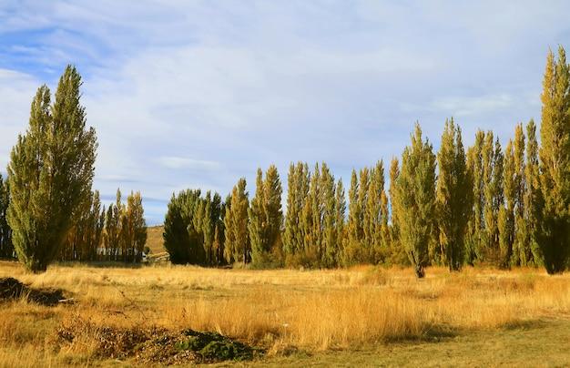 Bela paisagem de outono com fileiras de choupos na patagônia, argentina