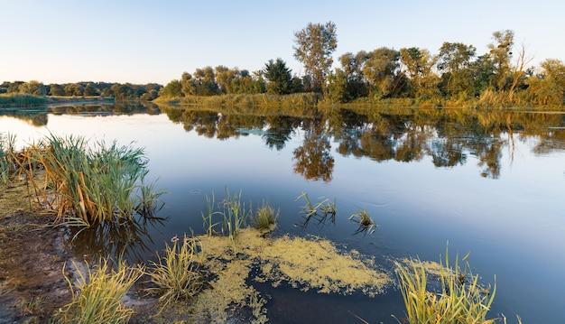 Bela paisagem de prados verdes e floresta de verão