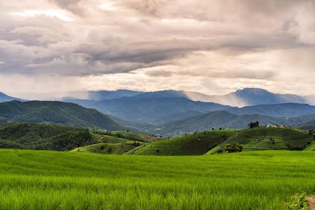 Bela paisagem de terraços de arroz verde