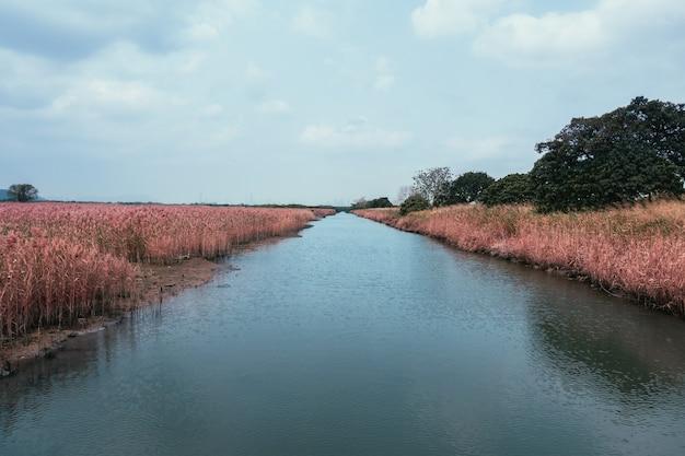 Bela paisagem de um rio em um campo de grama seca cercado por muitas árvores