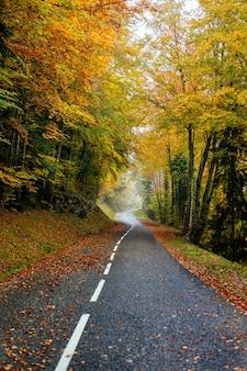 Bela paisagem de uma estrada em uma floresta com muitas árvores coloridas de outono