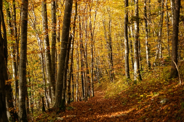 Bela paisagem de uma floresta com muitas árvores coloridas de outono