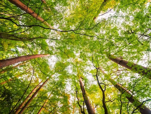 Bela paisagem de uma grande árvore na floresta com vista de baixo anjo