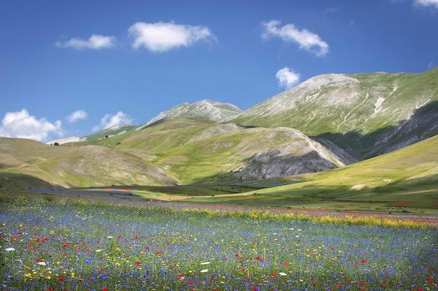 Bela paisagem de uma paisagem de um campo de flores