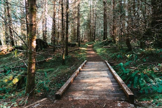 Bela paisagem de uma pequena ponte de tábua que conduz sobre uma vala na floresta