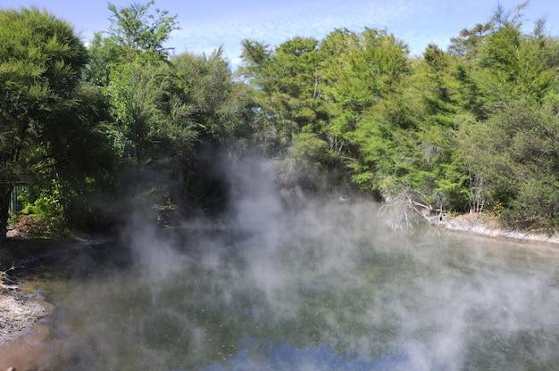 Bela paisagem de uma piscina aquecida cercada por árvores verdes na nova zelândia