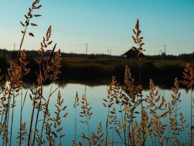 Bela paisagem de verão à beira do lago à noite