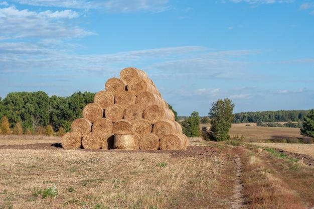Bela paisagem de verão com uma pilha de canudos no campo