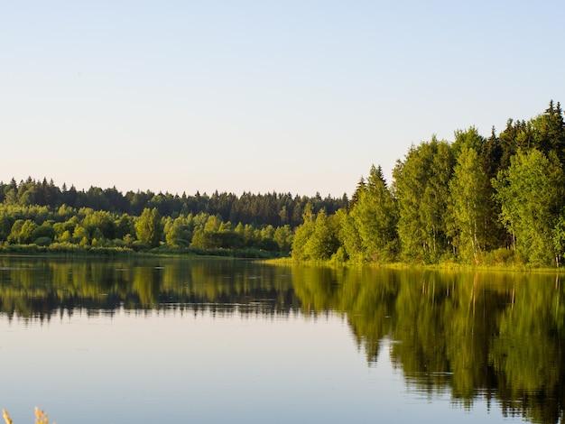 Bela paisagem de verão de um lago ensolarado na floresta