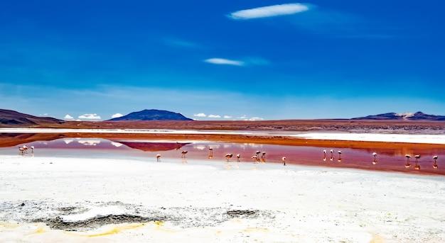 Bela paisagem do deserto boliviano com flamingos