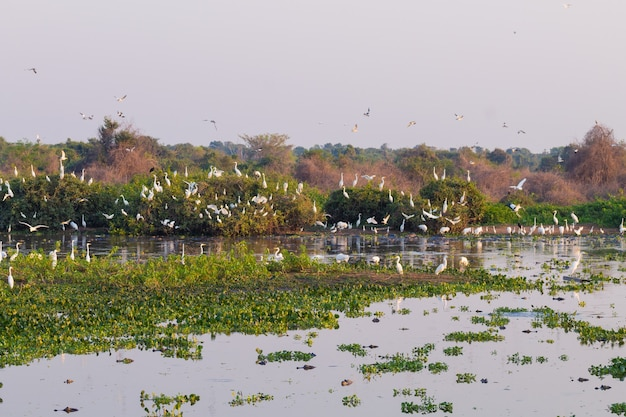 Bela paisagem do pantanal, américa do sul, brasil. natureza e vida selvagem ao longo da famosa estrada de terra transpantaneira.