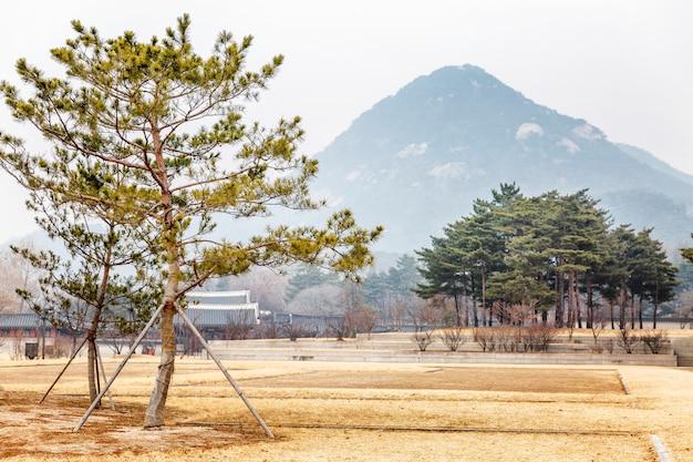 Bela paisagem em um parque de inverno na coréia do sul.