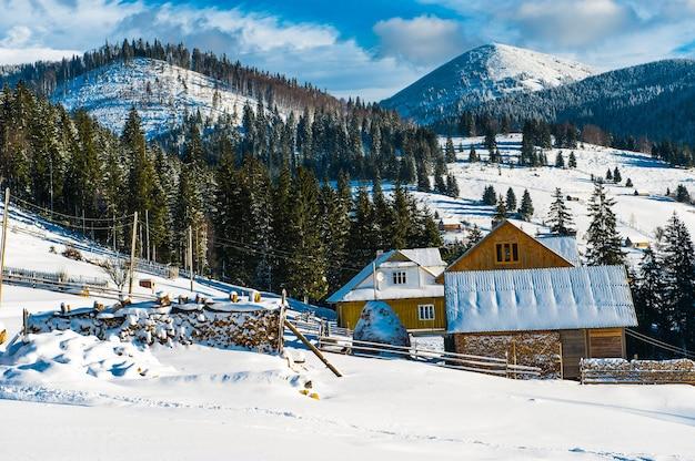 Bela paisagem ensolarada de inverno nas montanhas dos cárpatos