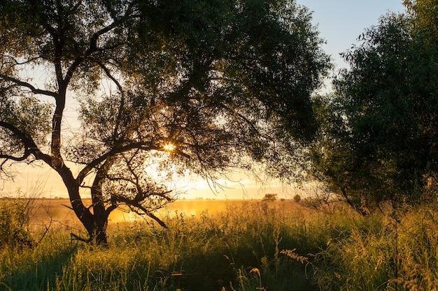 Bela paisagem ensolarada de manhã de verão