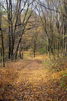 Bela paisagem ensolarada de outono com folhas vermelhas secas caídas, estrada através da floresta e árvores amarelas