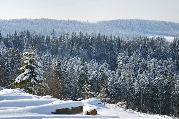Bela paisagem montanhosa com árvores nevadas