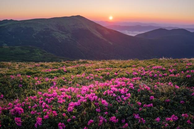 Bela paisagem montanhosa com flores desabrochando rododendros