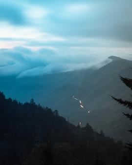 Bela paisagem montanhosa com pinheiros e um fundo nebuloso