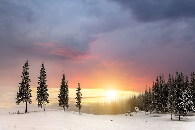 Bela paisagem montanhosa de inverno. árvores altas de abetos verdes escuros cobertas de neve nos picos das montanhas ao pôr do sol.