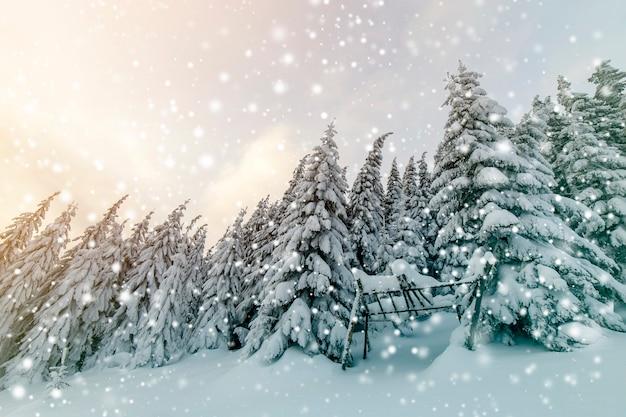 Bela paisagem montanhosa de inverno. árvores de abeto altas cobertas de neve na floresta de inverno e o fundo do céu nublado.