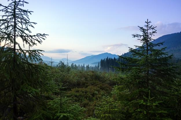 Bela paisagem montanhosa. fundo de florestas de pinheiros na neblina matinal