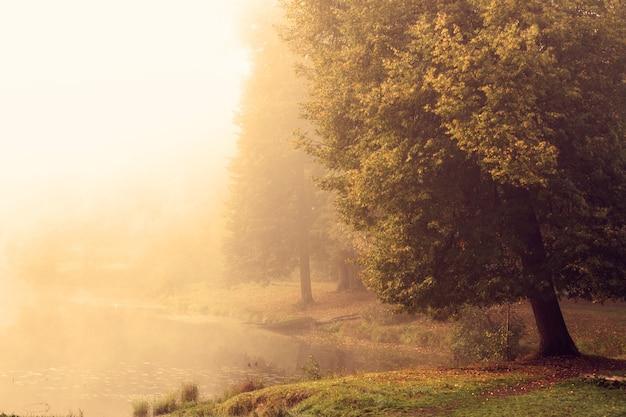 Bela paisagem natural com árvores em meio à névoa à beira do lago