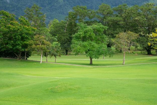 Bela paisagem parque de grama verde e fundo de árvore