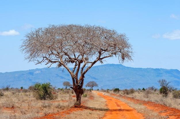 Bela paisagem sem árvore ninguém na áfrica