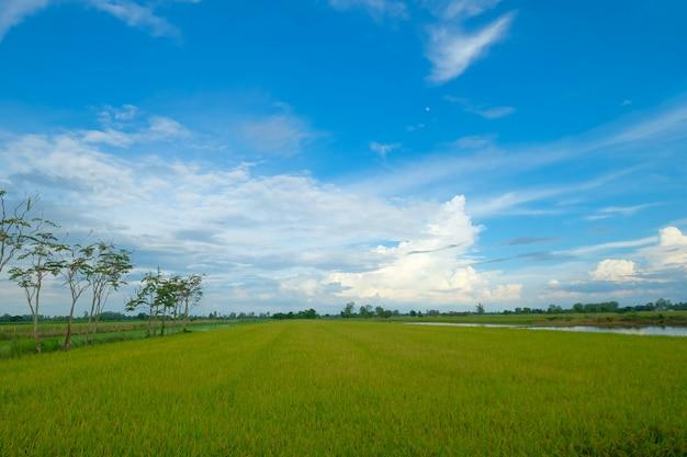 Bela paisagem verde