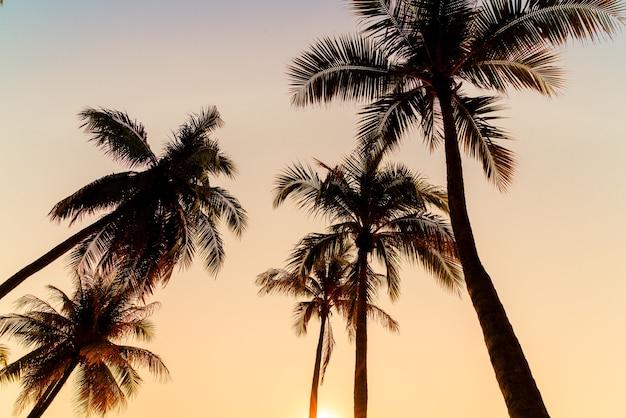 Bela palmeira de coco com pôr do sol no céu crepuscular
