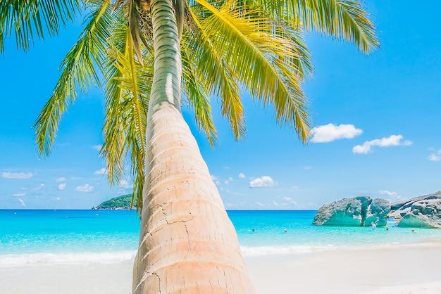 Bela palmeira de coco
