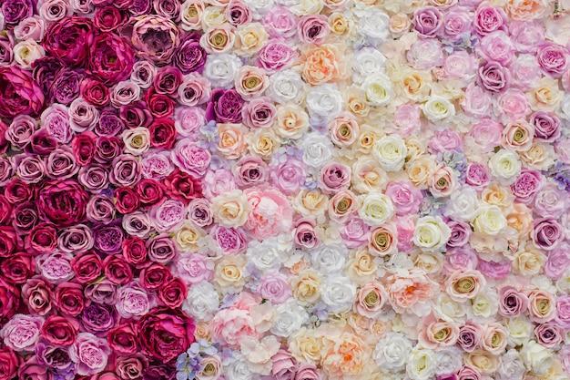 Bela parede de rosas cor de rosa e vermelhas