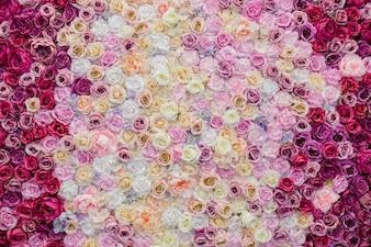 Bela parede decorada com rosas