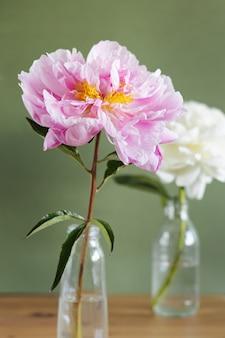 Bela peônia rosa fresca em um vaso de vidro na vista lateral de fundo verde. vida ainda moderna. foto vertical de fundo floral natural.