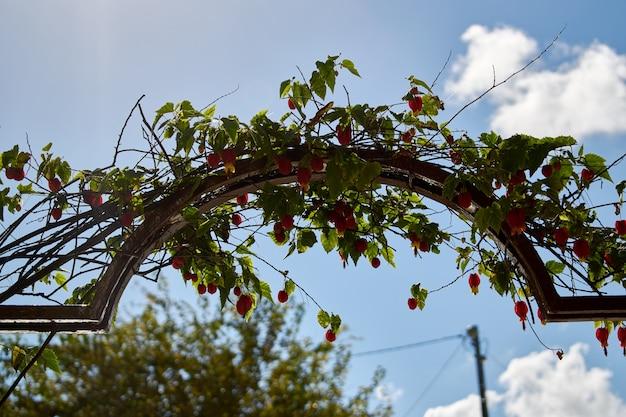 Bela planta cultivada sobre um arco de metal em um jardim