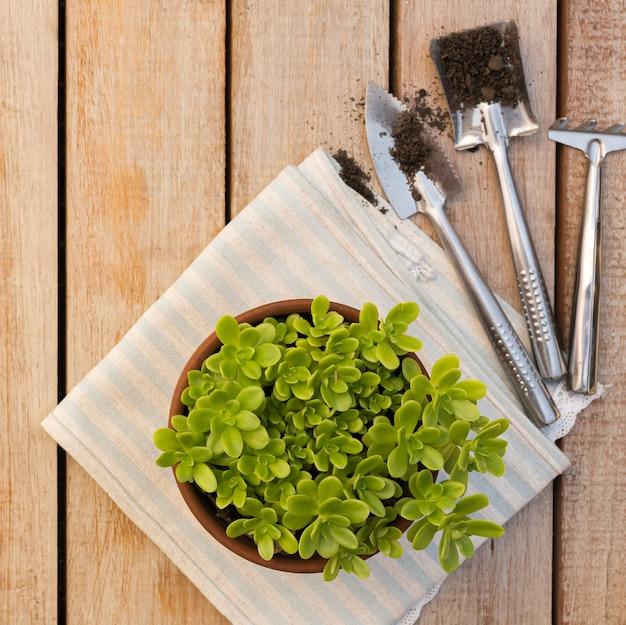 Bela planta em vaso na mesa de madeira