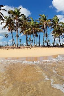 Bela praia caribenha com palmeiras e céu