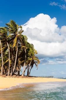 Bela praia caribenha com palmeiras e nuvens