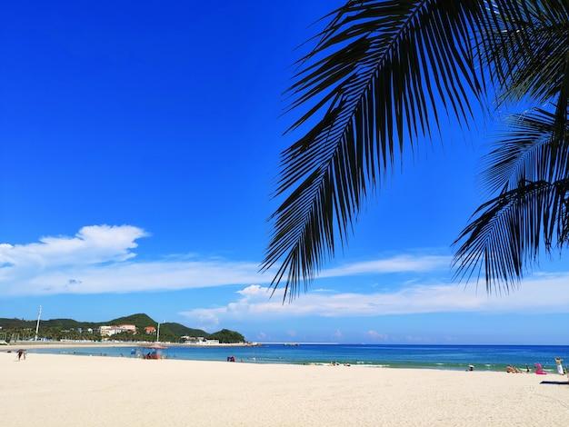 Bela praia com palmeiras