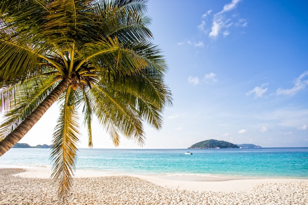 Bela praia tropical com coqueiro, praia na ilha similan, praia de areia andaman mar