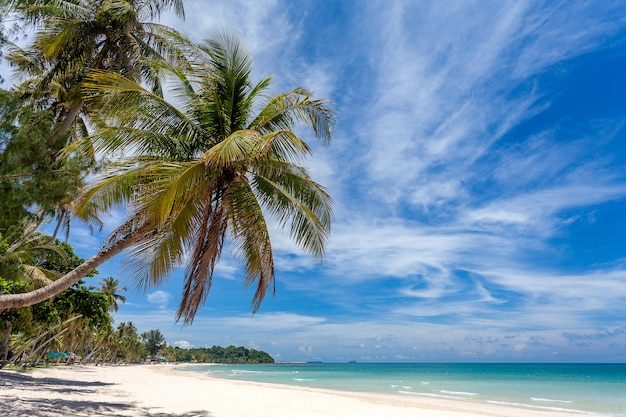 Bela praia tropical mar e oceano com palmeira de coco