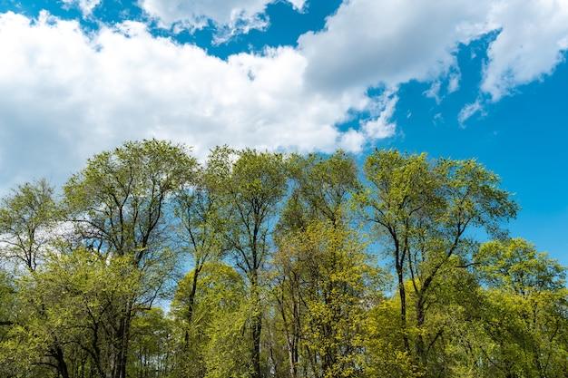 Bela primavera florescer no jardim inglês em munique.