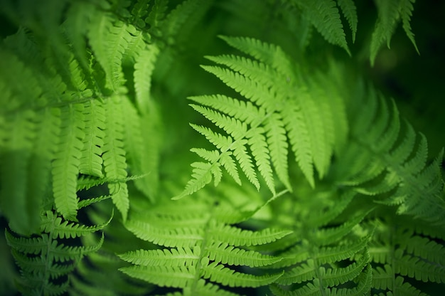 Bela samambaia folhas folhagem verde natural floral samambaia