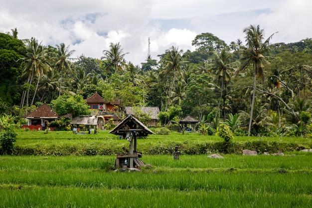 Bela selva e campos de arroz da ásia. conceito verde.